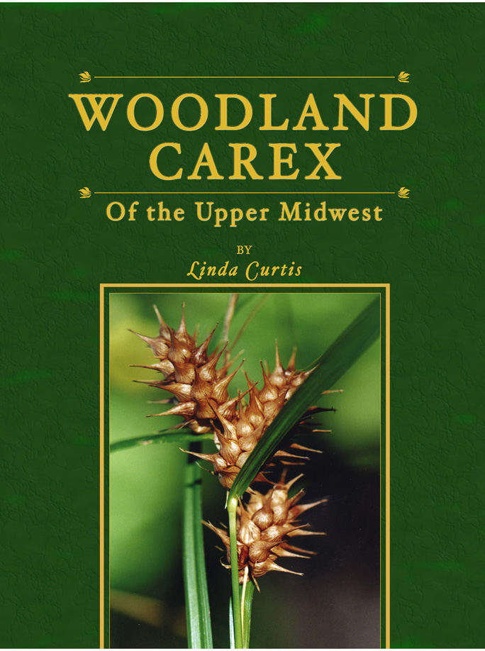 woodland carex cover,